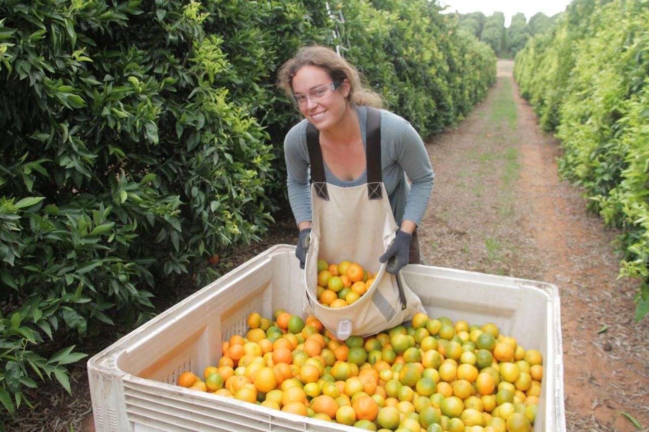 Fruit picking en WHV